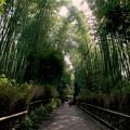 嵐山 竹林の径