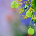 Photos: 秋ですよ~!