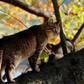 桜の樹の上で