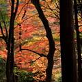 Photos: 晩秋の窓