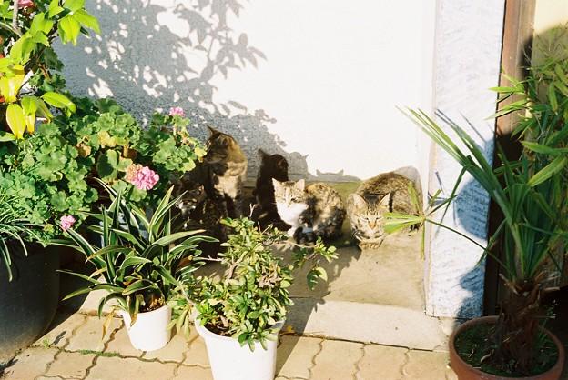 日だまりの猫だまり