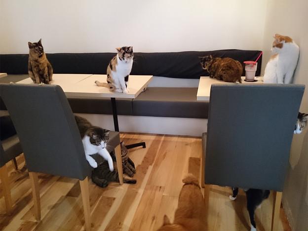 写真: 猫カフェキューリグ TheLoft 天神(8)