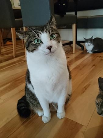猫カフェキューリグ TheLoft 天神(1)