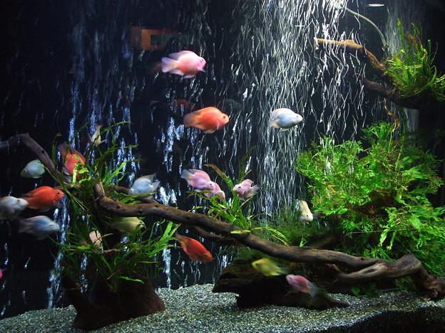 六本木ヒルズ森ビル 水族園 2008