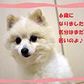 Photos: 祝?6歳