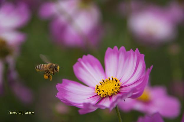 昆虫と花の共生