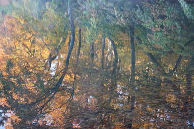 鎌池の紅葉(写り込み)