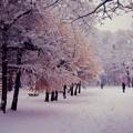 Photos: 来ました冬将軍