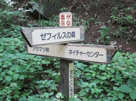 桐生自然観察の森08