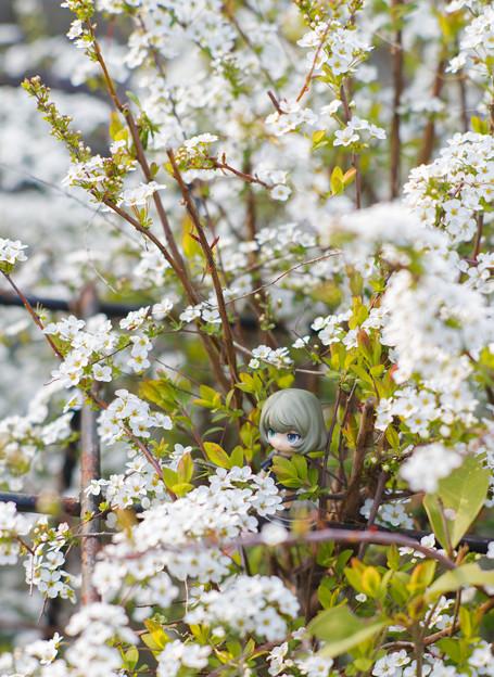 白いお花と楓さん