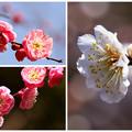 写真: 気分は「春うらら」~♪