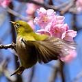 春色の中で♪~2~