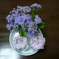 Photos: 141001-4 アゲラタムと薄紫のバラ