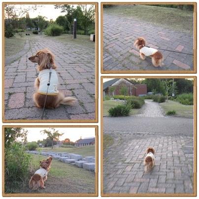 20110705 お散歩