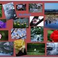 健民公園の四季