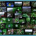 2009.6.24 栂池自然園
