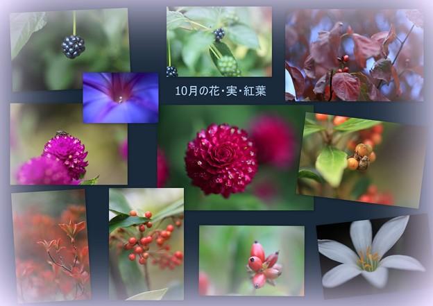 10月のわが家の花、実、紅葉+虫の抜け殻
