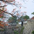 大阪城の石垣 紅葉