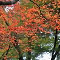 石山寺(4) モミジの紅葉