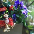 Photos: クリスマスの寄せ植え2