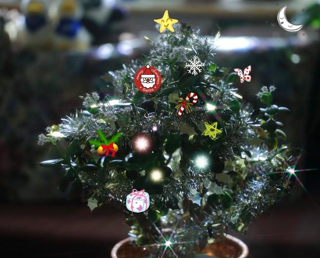 金のなる木のクリスマスツリー