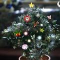 Photos: 金のなる木のクリスマスツリー