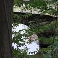 Photos: 尾山神社 図月橋