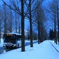 Photos: 雪の並木道
