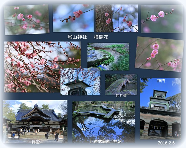 尾山神社 梅開花