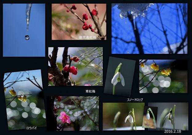 我が家の2月の花(4)とツララ