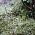 庭に降る雪(2)