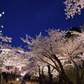 金沢城公園 ライトアップ 桜のトンネル