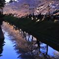 金沢城ライトアップ お堀の桜(2)