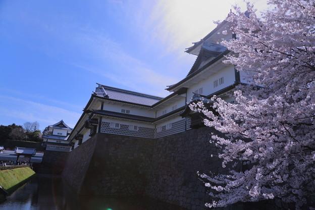 金沢城と桜