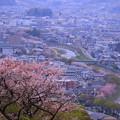 卯辰山から 浅野川と桜