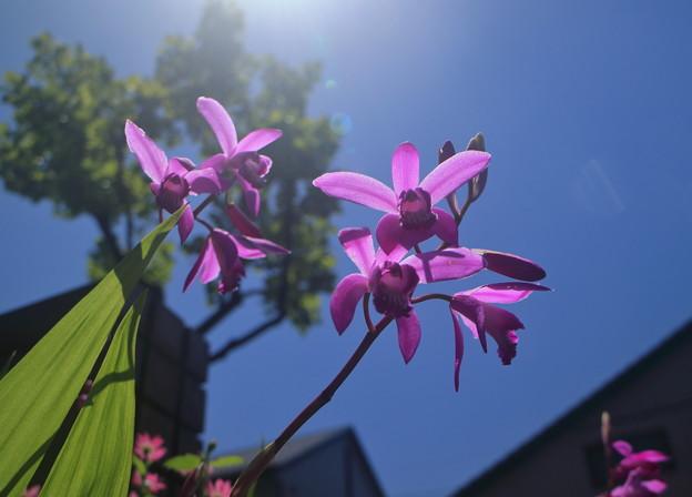 青空と紫蘭