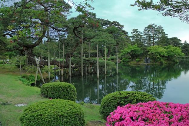 5月の兼六園 唐崎松と霞ヶ池