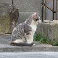 Photos: にゃ~
