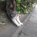 写真: 実践ヨガ:ネコのポーズ