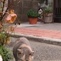 レディを見つめるオス猫