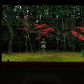 Photos: 印象:ひのもとの晩秋