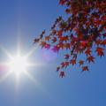 燃え盛る秋の日