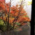Photos: 白昼夢