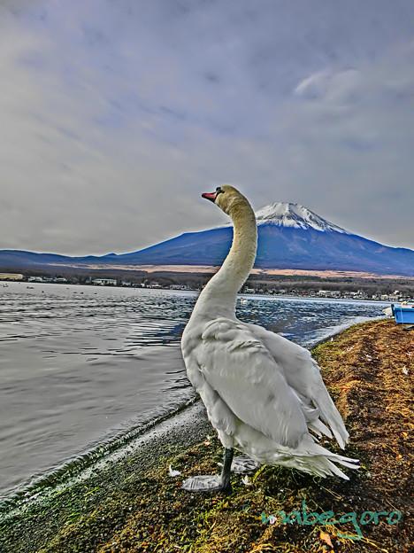 富士より高い~♪