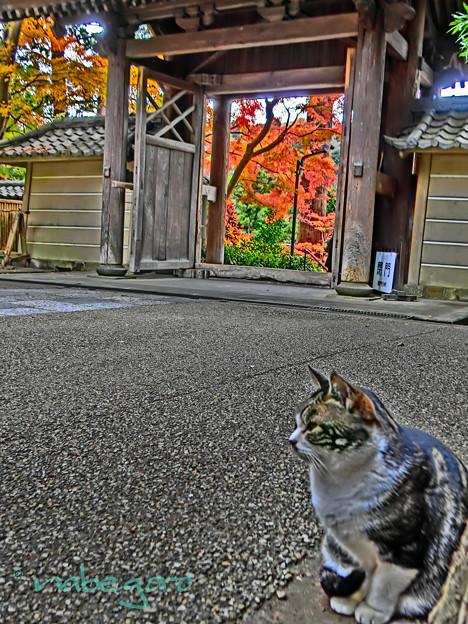 円覚寺の秋-3