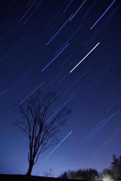 1本の木と星の軌跡