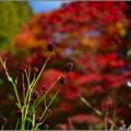 Photos: 秋の紅