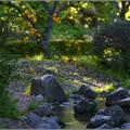 Photos: 小川に