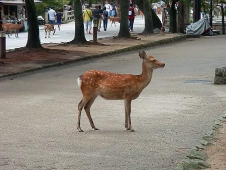 夏の奈良市内2