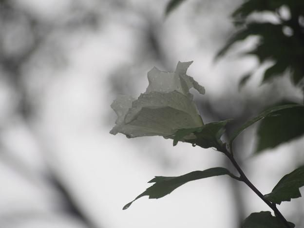 写真: 雨空に溶ける